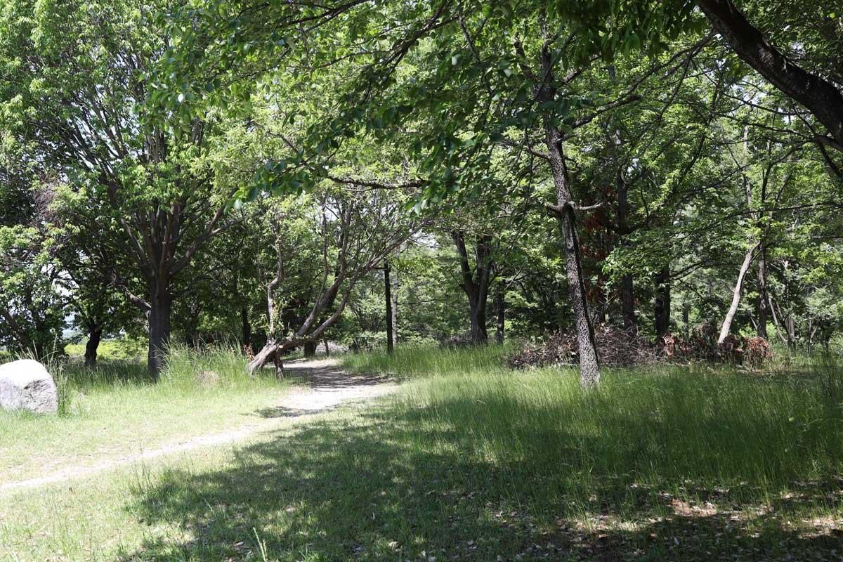 自然に囲まれた遊歩道