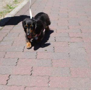 くりはま花の国での犬の散歩