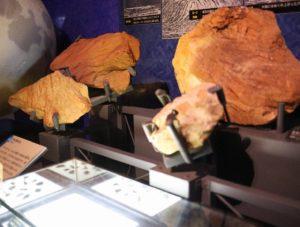 生命の星・地球博物館に展示している岩石