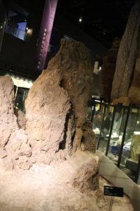 生命の星・地球博物館に展示している地層