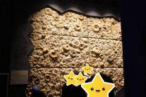 生命の星・地球博物館に展示しているアンモナイト