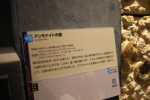 生命の星・地球博物館に展示しているアンモナイトの壁