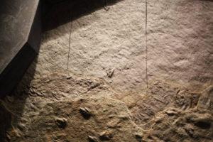 生命の星・地球博物館に展示している恐竜の足跡