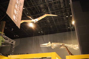 生命の星・地球博物館に展示している恐竜