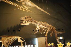 生命の星・地球博物館に展示している恐竜の骨格