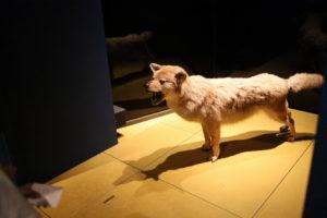 生命の星・地球博物館に展示している動物のはく製