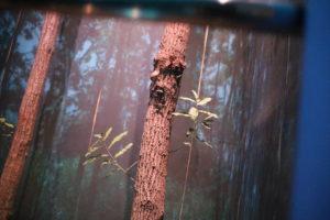 生命の星・地球博物館に展示されている昆虫
