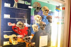 生命の星・地球博物館に展示されている頭蓋骨