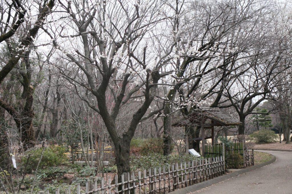 相模原公園の散歩道