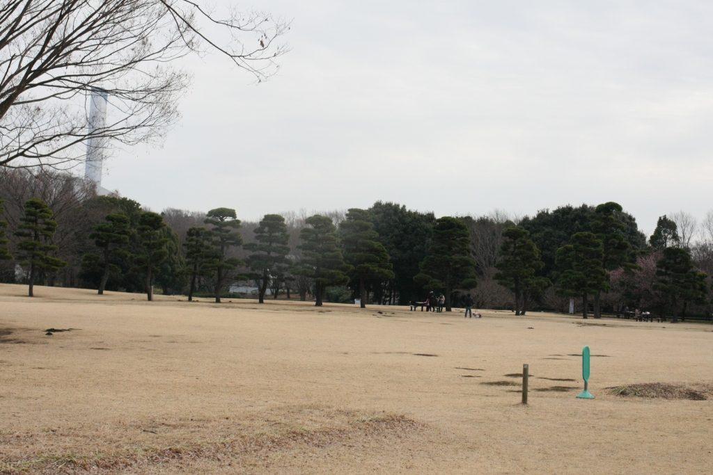 相模原公園の芝生広場