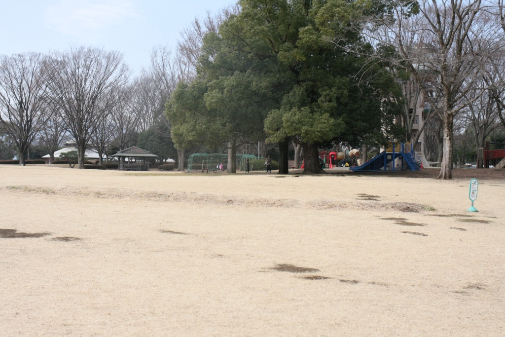 相模原公園の芝生広場と遊具
