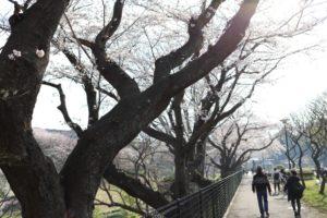 保土ヶ谷公園の散歩道