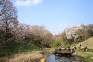 保土ヶ谷公園の池