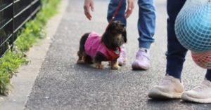 保土谷公園での犬の散歩