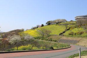 マザー牧場の菜の花が見える景色