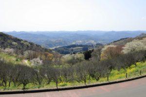 マザー牧場から見える山と菜の花の景色