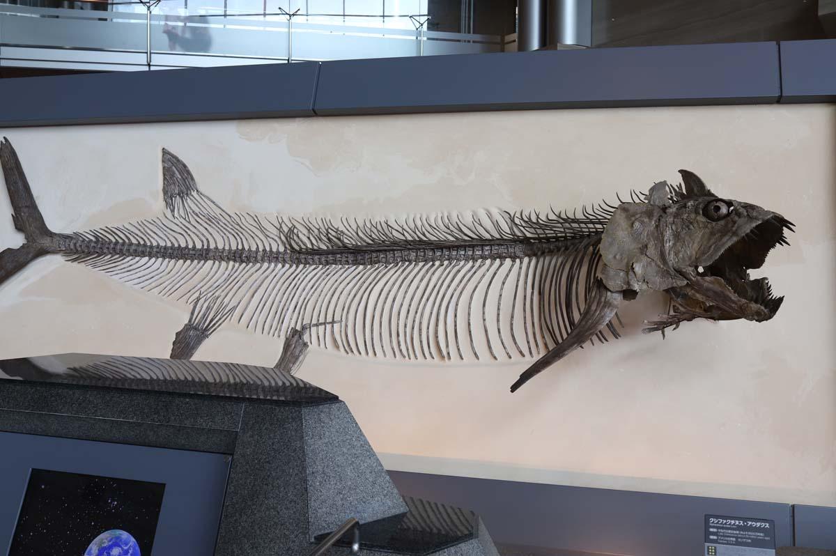 古代魚の展示