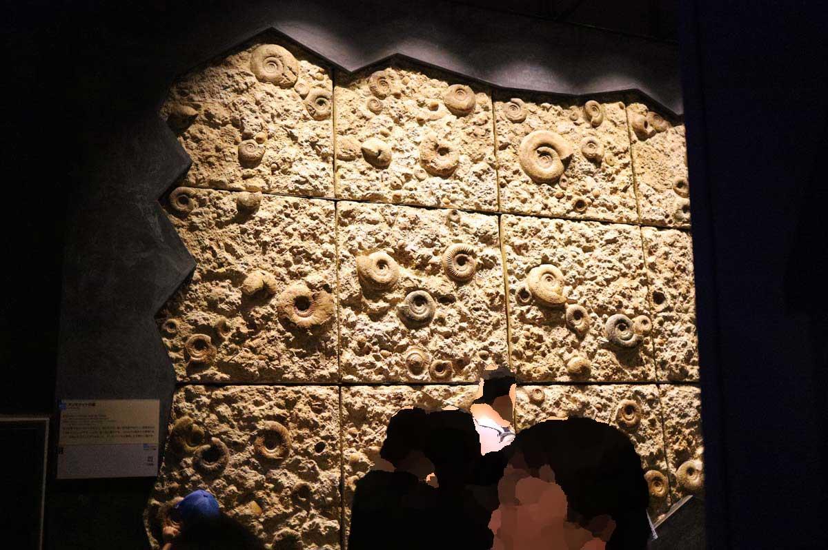 アンモナイトの壁