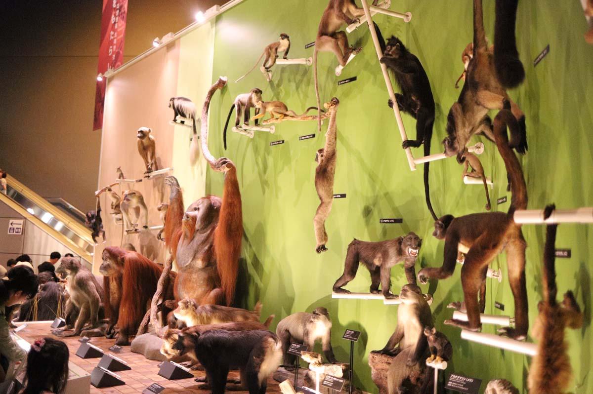 動物のはく製の展示
