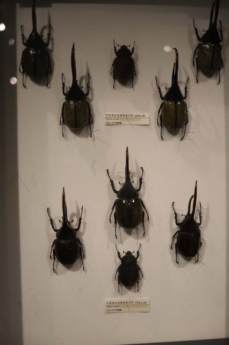 昆虫の展示
