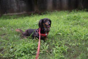 野山北公園での犬の散歩