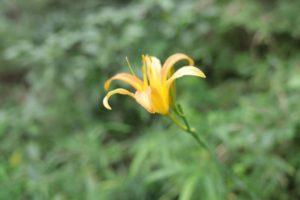 野山北公園に咲いていた花