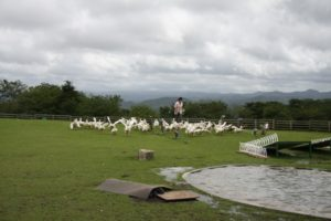 マザー牧場の鳥