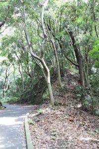観音崎公園の散歩道