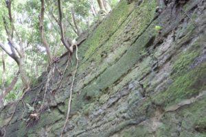 観音崎公園の散歩道で見ることができる地層