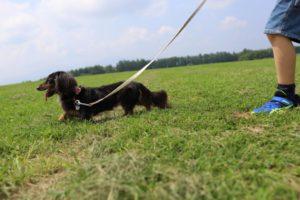 長門牧場での犬の散歩