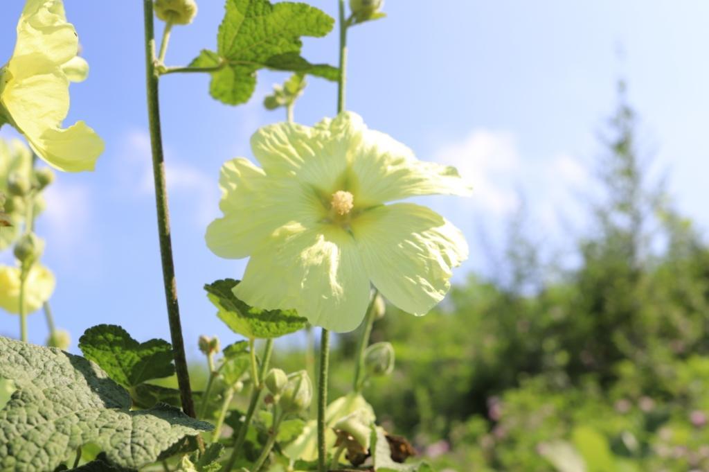佐久パラダに咲いている花