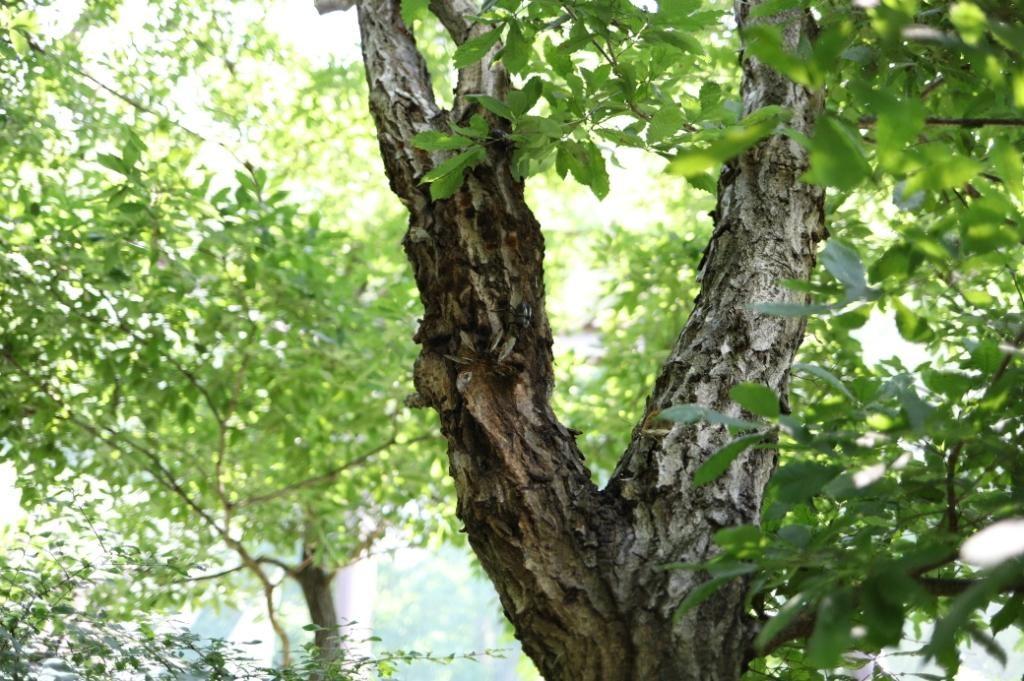 佐久パラダのカブトムシドームの中にいるカブトムシ