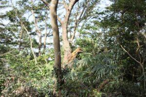 観音崎公園の台風による倒木