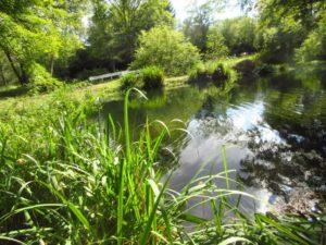 五光牧場オートキャンプ場の管理棟近くの池