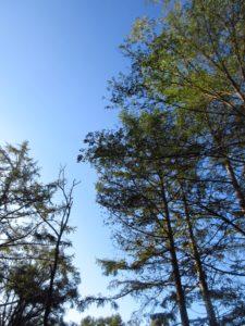 五光牧場オートキャンプ場の林間サイト