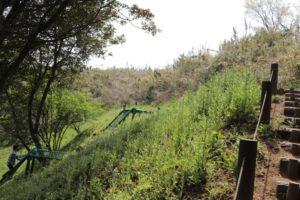 あつぎこどもの森にあるネット遊具ムササビの道を上から見た景色