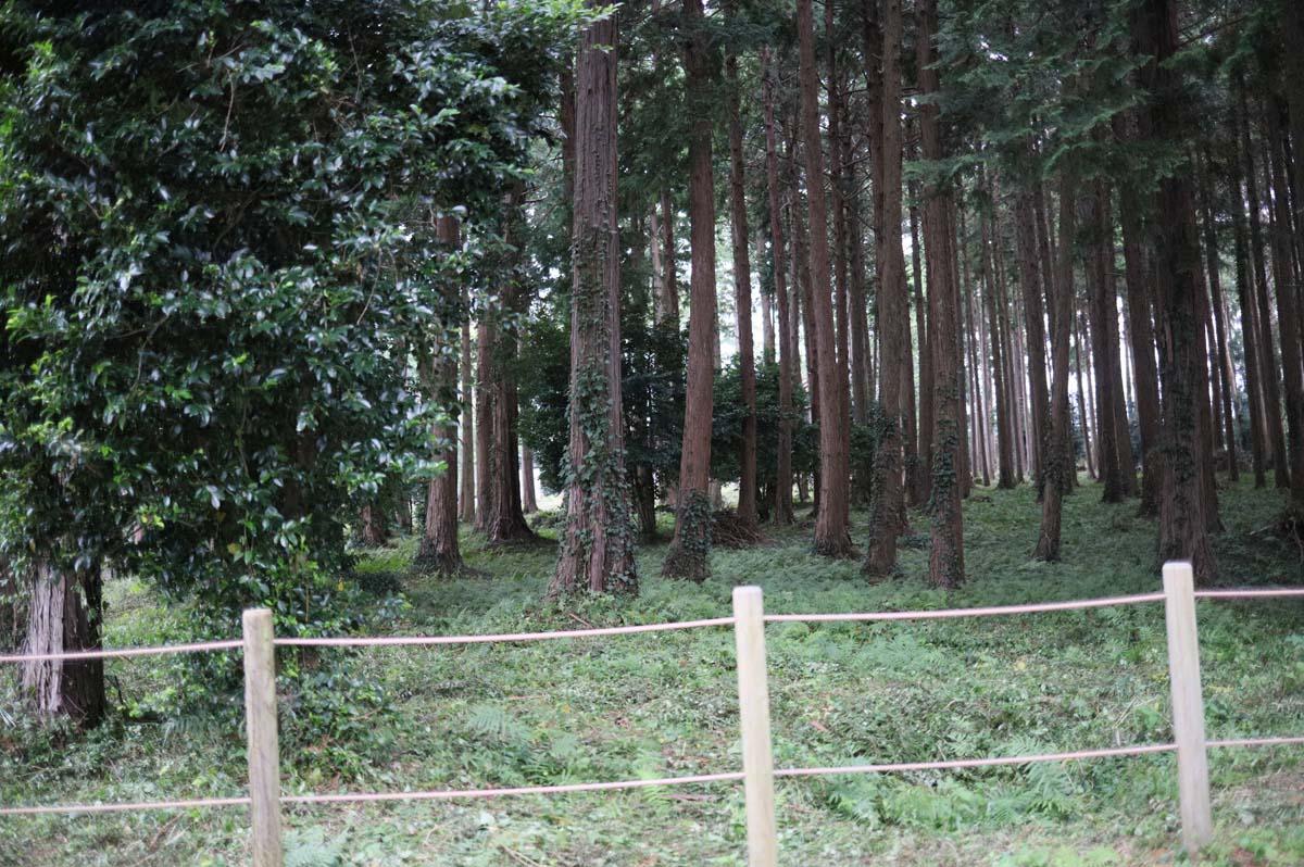 諏訪神社の森