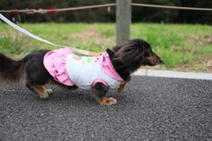 おだわら諏訪の原公園での犬の散歩