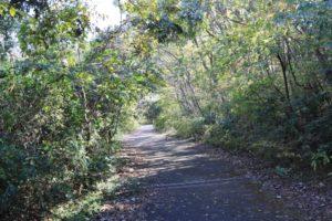 上郷森の家の自然観察の森