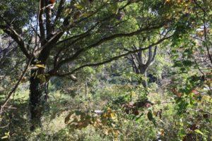上郷森の家の自然観察の森の散歩道にある休憩スペース
