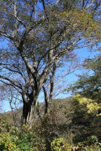 上郷森の家の自然観察の森の散歩道