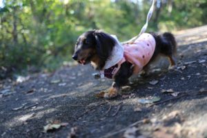 上郷森の家の自然観察の森での犬の散歩