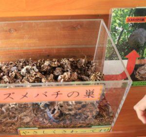 上郷森の家の自然観察センターの展示
