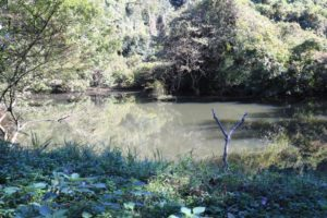 上郷森の家自然観察の森にあるバードウォッチングができるエリア