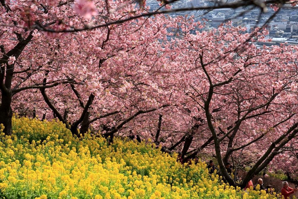 2019年のまつだ桜まつり