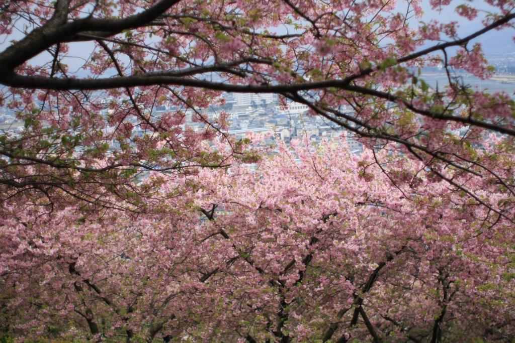 2015年のまつだ桜まつり