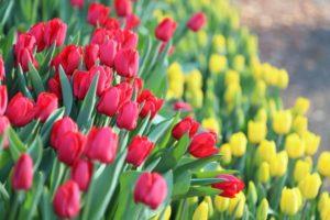 相模原公園に咲いている花