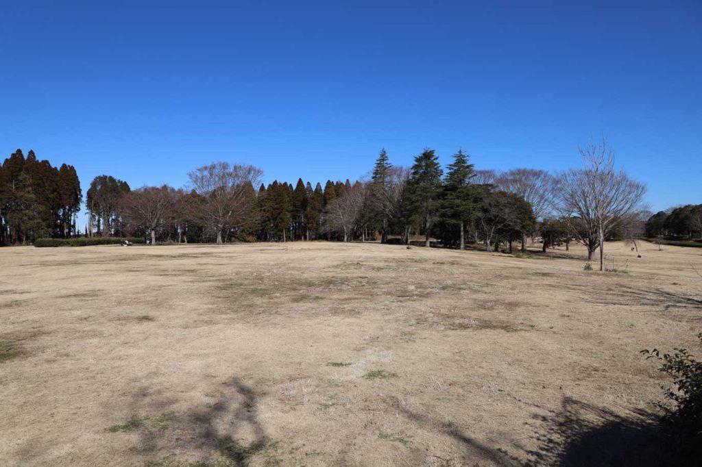 昭和の森公園の芝生広場