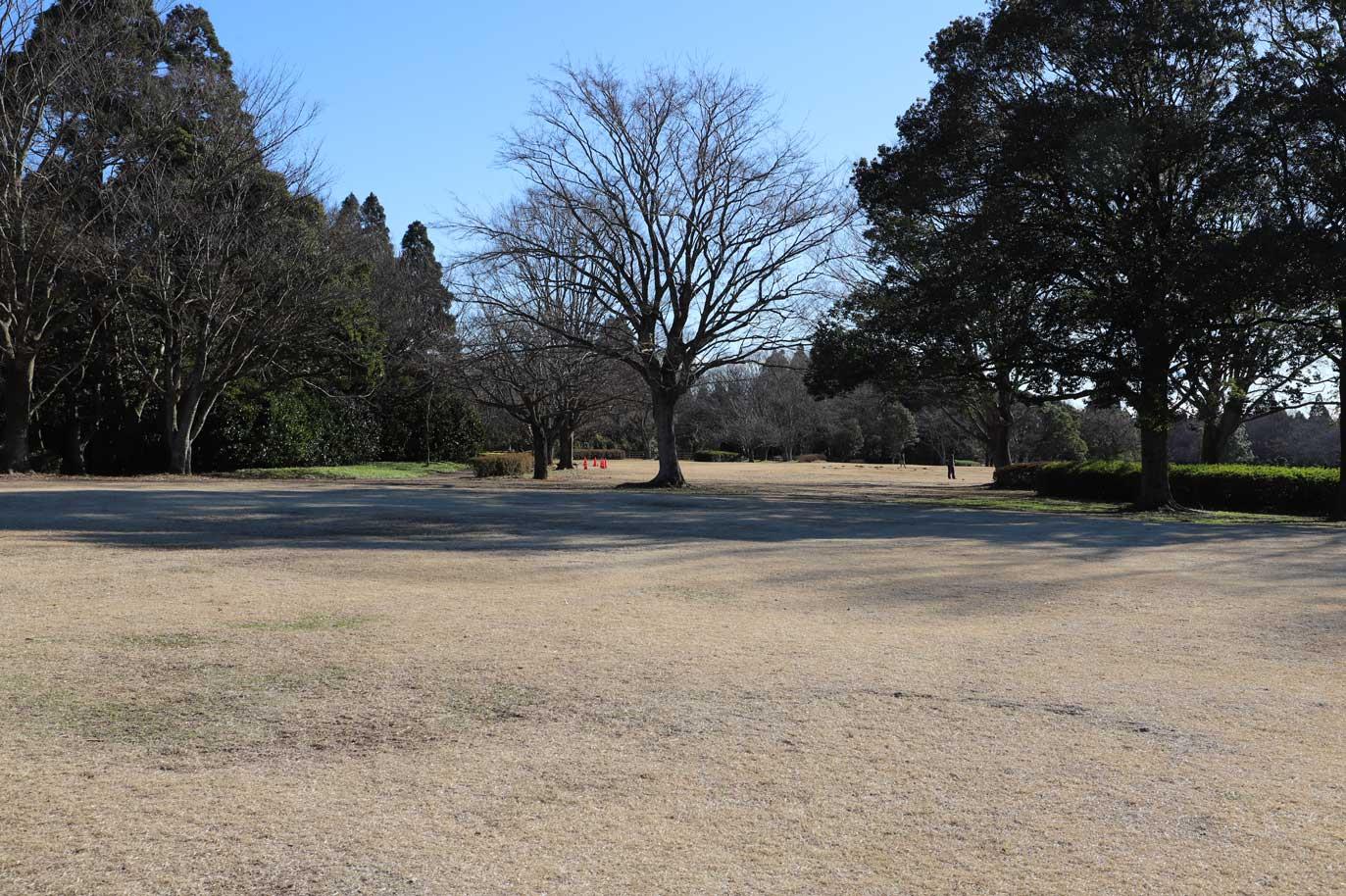 昭和の森の芝生広場