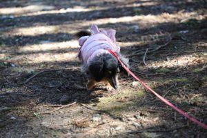 幕山公園での犬の散歩